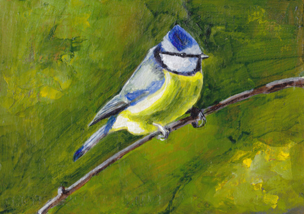 Blue Tit on Paper