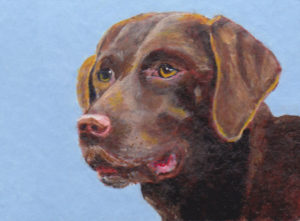 Brown Dog Pet Portrait
