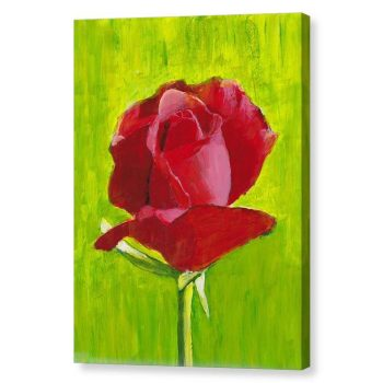 Red Rose 12x16 Canvas Print