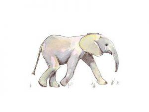 Baby Elephant in Pastel